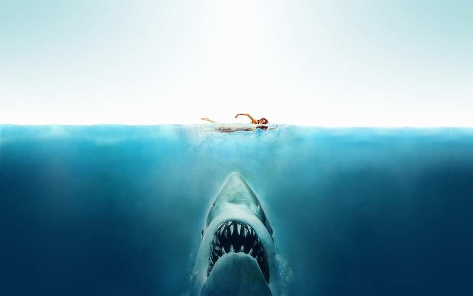 Jaws All The Differences Between The Book And The Film