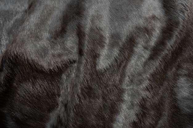Pelo Animal Fondo Textura Cuero Vaca Piel Natural Piel Vaca Negra Esponjosa 101276 113